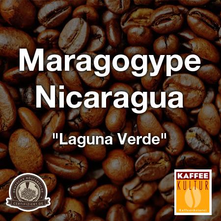 maragogype-nicaragua