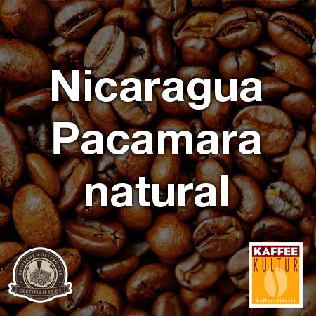 Nicaragua-Pacamara-natural