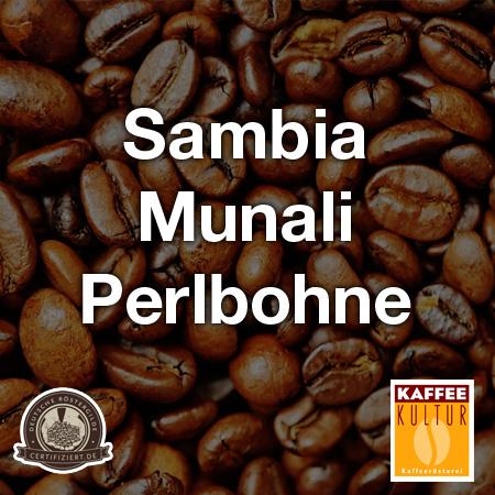 Sambia-Munali-Perlbohne