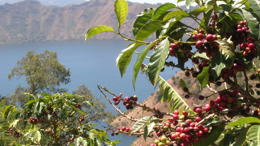 Unsere Reisen in den Kaffee Ursprung