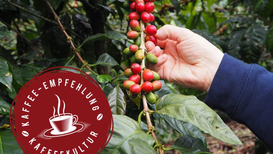 "Kaffee-Empfehlung Herbst: Nicaragua Maragogype, ""Laguna Verde"""